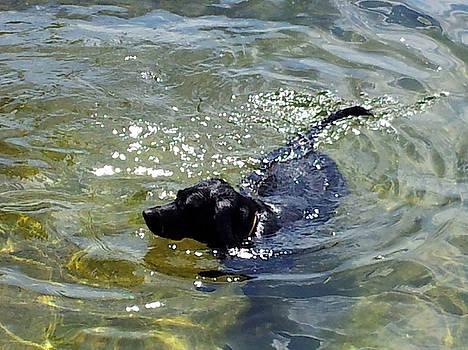 Dog Paddle Sparkle by Susan Janus