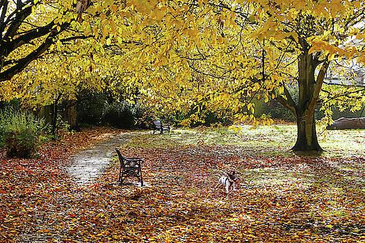 Dog Paradise by Judi Saunders