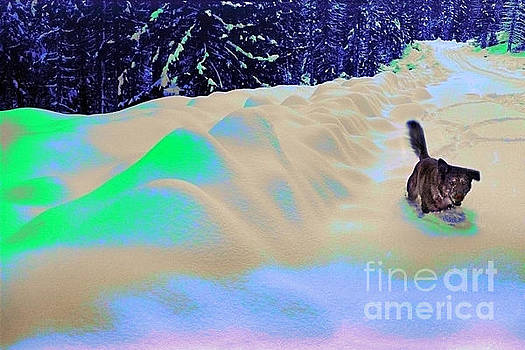 Dog Playing in a Surreal Psyscape of Colored Glowing Snow by Wernher Krutein