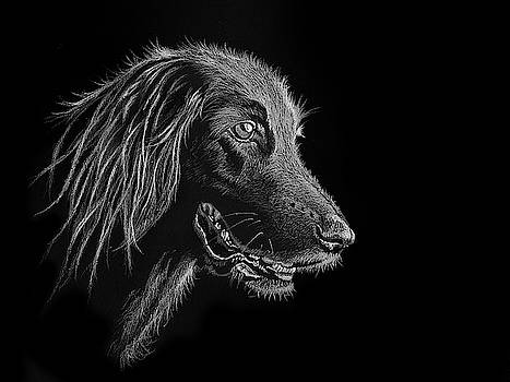 Dog Portrait by Jeff Burcher