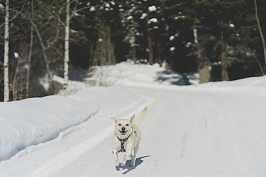 Julieta Belmont - Dog running outside
