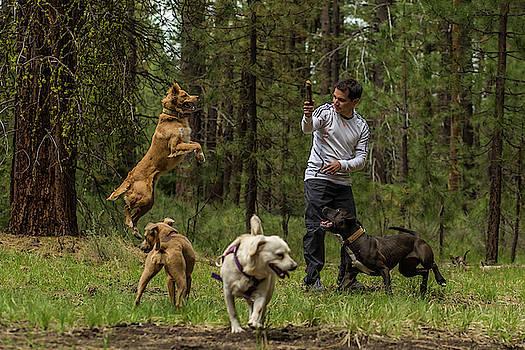 Julieta Belmont - Dogs playing