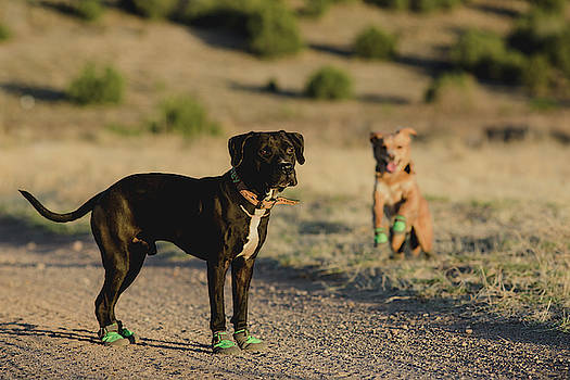 Julieta Belmont - Dogs with boots