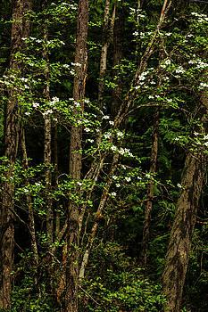 Mike Penney - Dogwood Tree 2