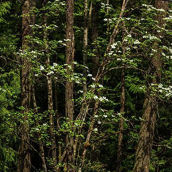 Mike Penney - Dogwood Tree 3