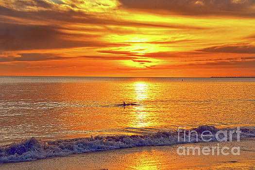 Dolphin at Sunset by Catherine Sherman