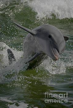 Dolphin by Debra Kewley
