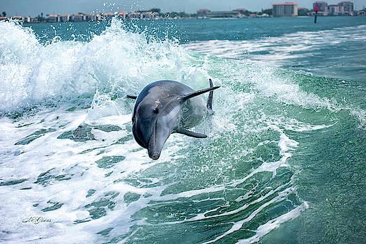 Dolphin Surfing by Natalie Simon-Joens