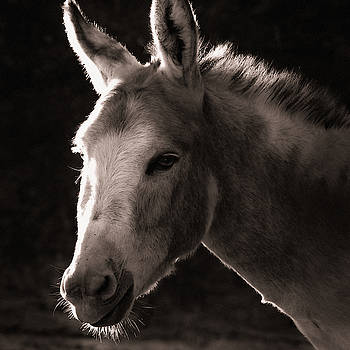 Donkey by Christine Sponchia