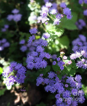 Felipe Adan Lerma - Dorset Street Vermont Community Gardens Violet Blooms Vertical