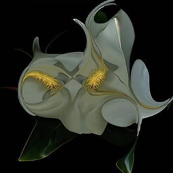 Double Magnolia by Carel Schmidlkofer