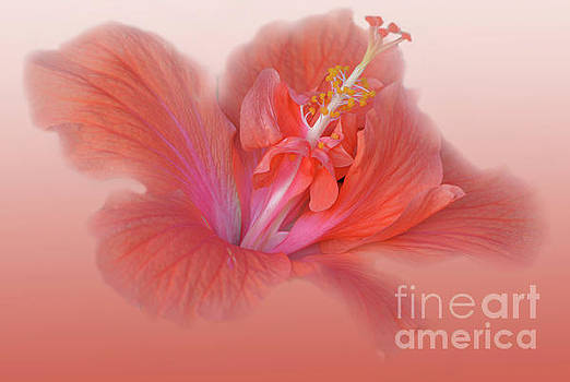 Double Peach Hibiscus by Leticia Latocki
