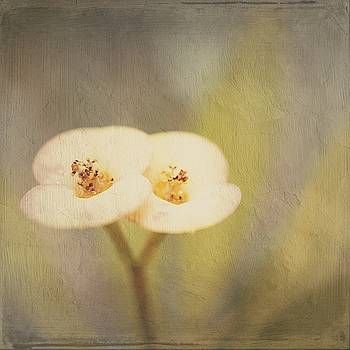 Double tenderness by Silvia Marcoschamer