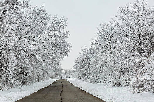 Down the Snowy Road by Terri Morris