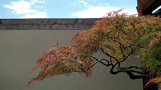 Dragon Bonsai by John Eric Goines