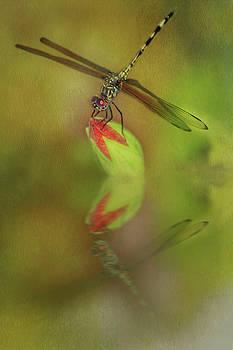 Dragonfly  by Leticia Latocki