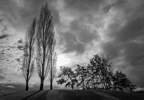 Dramatic Fall Trees by Dave Matchett