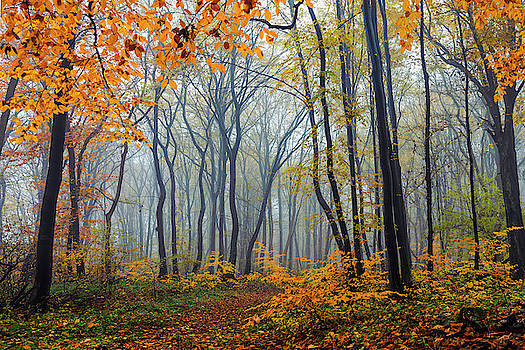 Dream Forest by Evgeni Dinev