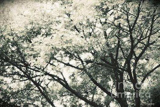 Dreaming Trees 1 by Sarah Loft