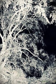 Dreaming Trees 2 by Sarah Loft