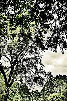 Dreaming Trees 3 by Sarah Loft