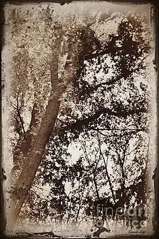 Dreaming Trees 5 by Sarah Loft