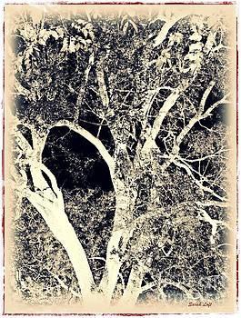 Dreaming Trees 6 by Sarah Loft