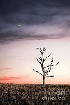 Dreams Of The Dead Tree by Evelina Kremsdorf
