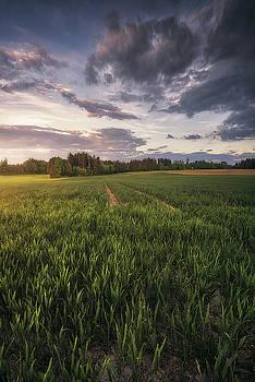 Dreamy fields by Manuel Martin