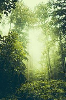 Dreamy Summer Forest by Dirk Wuestenhagen
