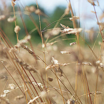 Scott Lyons - Dried Grass Out Of Focus