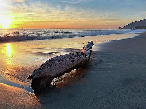 Drift Wood at Sunset II by John Rodrigues