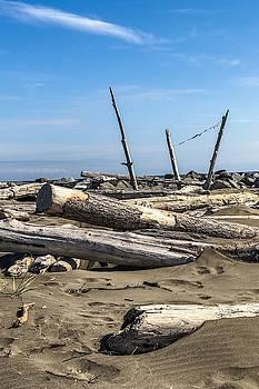 Drift wood on the beach #2 by Tatiana Travelways
