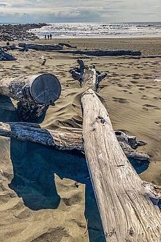 Drift wood on the beach by Tatiana Travelways