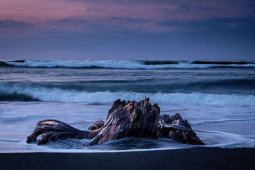 Driftwood by Artisanal Photo