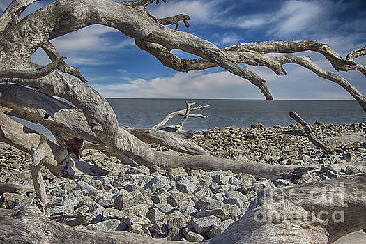 Driftwood Beach Branches by Tom Gari Gallery-Three-Photography