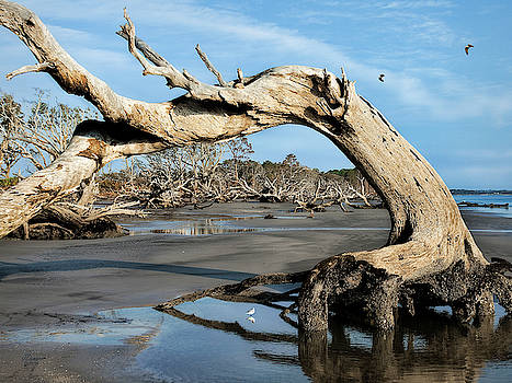 Driftwood Beach by Jim Ziemer