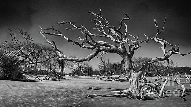 Driftwood Beach In Black And White by Tom Gari Gallery-Three-Photography