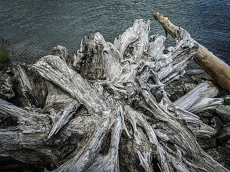Driftwood by Mark Duehmig