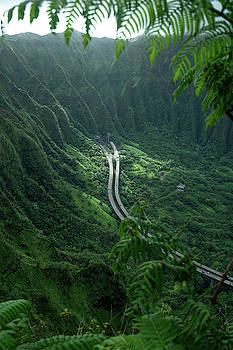 Drive in Paradise  by Noah Lang