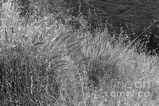 Dry Grass by Katherine Erickson