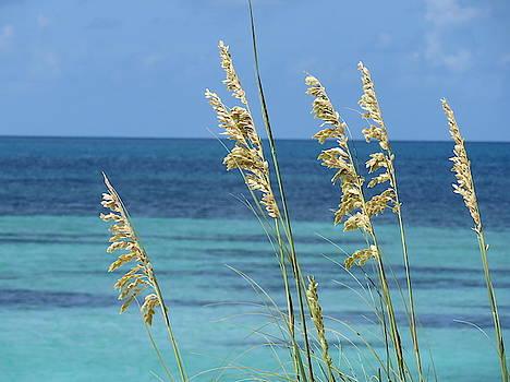 Dry Tortugas Sea Oats #1 by Julie Harrington