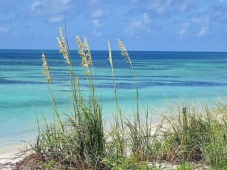 Dry Tortugas Sea Oats #3 by Julie Harrington
