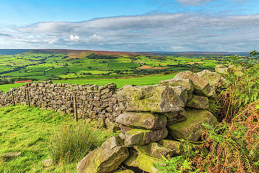 David Ross - Drystone wall, Danby, North York Moors