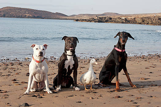 Three Dogs and a Duck by Nikki Attree
