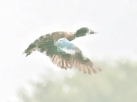 Duck in Flight by Philip A Swiderski Jr