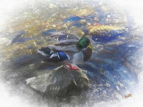 Duck on a rock. by Rusty R Smith
