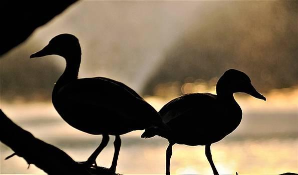 Ducks At Audubon Park Lagoon In New Orleans by Michael Hoard