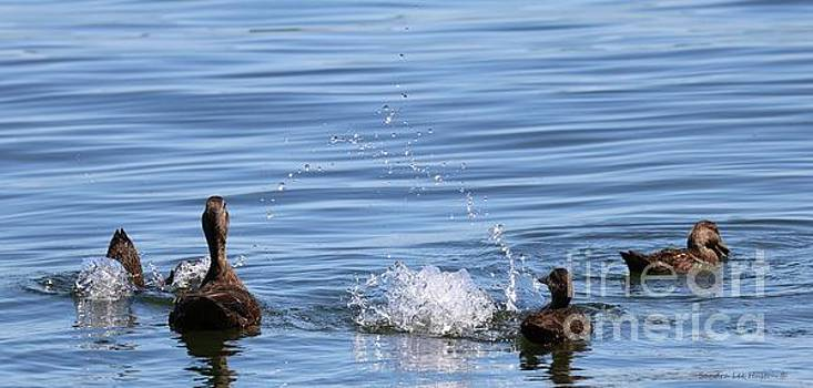 Sandra Huston - Ducks Awesome Water Display