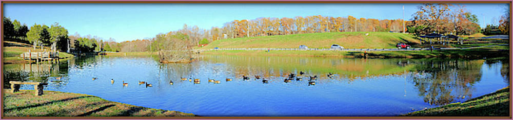 Ducks On A Peaceful Pond by Constance Lowery